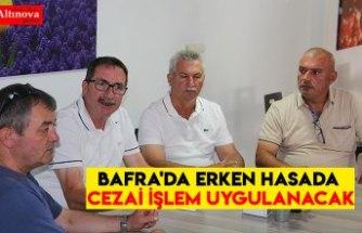 BAFRA'DA ERKEN HASADA CEZAİ İŞLEM UYGULANACAK