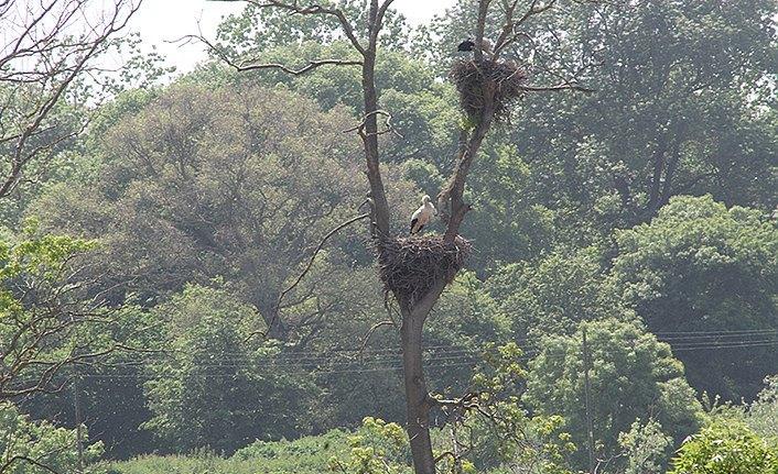 Kızılırmak Deltası Kuş Cenneti leyleklerle şenlendi