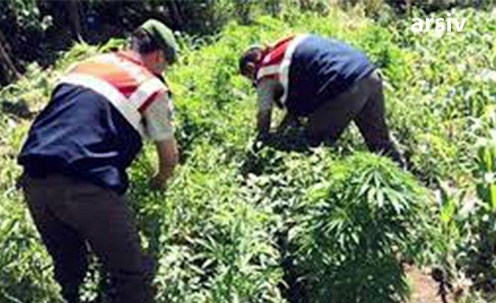 Samsun'da jandarmadan uyuşturucu operasyonu