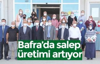 Bafra'da salep üretimi artıyor