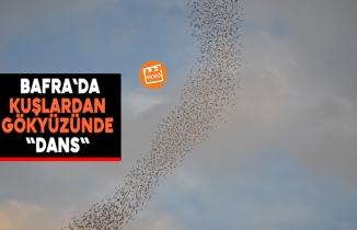 """Bafra`da Kuşlardan Gökyüzünde """"Dans"""""""