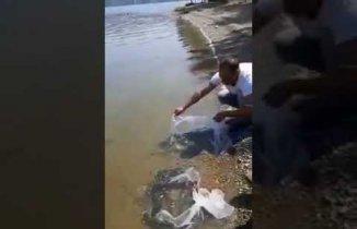 derbent baraj gölüne 50 bin sazan yavrusu bırakıldı